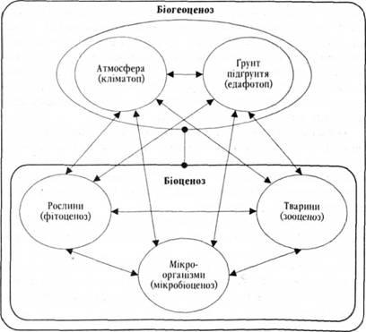 Схема строения биоценоза (за